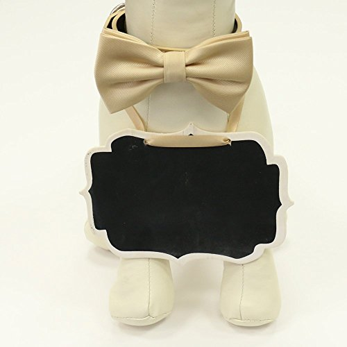 Dog-Collar-Ivory-Bow-Tie-and-Small-Chalk-Board-Bridal-Sign-Here-Comes-the-Bride-Sign-Ring-Bearer-Proposal-sign-0