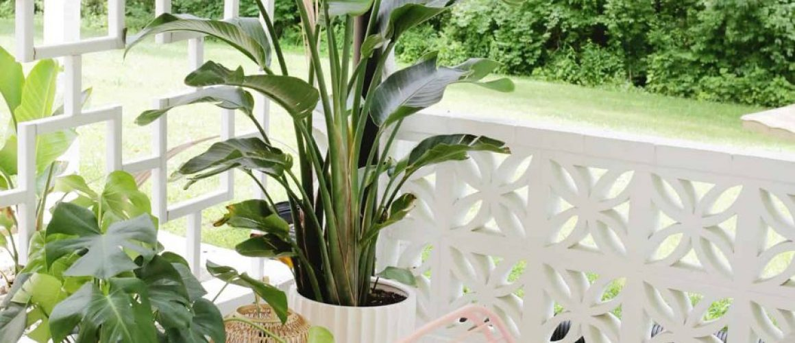 How-I-Keep-TropicalDesert-Plants-in-a-Cold-Climate-Location-click-through-for-tips-1-5